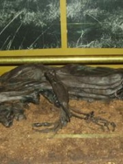 Photo of Tollund Man