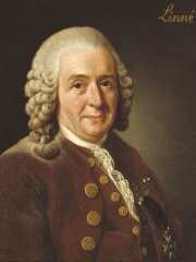 Photo of Carl Linnaeus